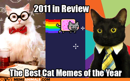 2011 in review the best cat memes of the year introducing our newest site meme animals cheezburger company blog,Cheezburger Memes