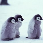 3_cute_penguins