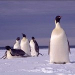relaxing_penguins